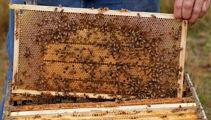 Hobbyist beekeeping a growing trend for kiwis