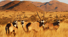Mike Yardley: Wild about Tswalu in the Kalahari