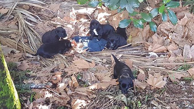 The Tauranga SPCA inspector happened upon the puppies by chance. (Photo / Supplied)