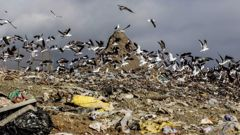 Eugene Sage's solution is to increase the cost of using landfills. Photo / Paul Taylor