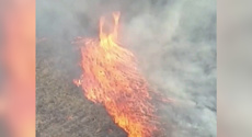 'Firenado' rages across Queensland bush as fires continue to burn