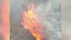 'Firenado' rages across Queensland bush, Sydney shrouded in toxic smoke