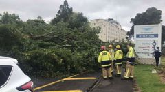 Three fire crews armed with chainsaws are attempting to remove a large tree blocking the northern end of Hospital Rd outside Middlemore Hospital. (Photo / Supplied)