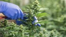 NUBU Pharmaceuticals CEO Mark Dye on medicinal cannabis