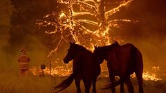 Horses stand while a firefighter works on a blaze in Bilpin. (Photo / News Ltd)