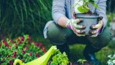 Ruud Kleinpaste: Gardening tips for your summer break