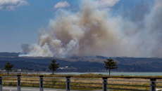 Large forest fire north of Napier