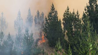 Hawke's Bay forest fire doubles in size again, now 300 hectares