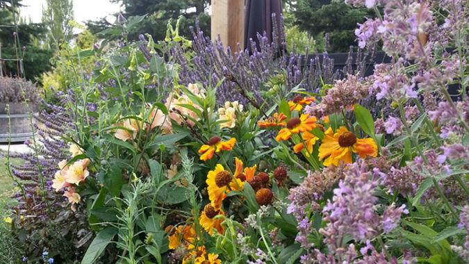 Jo McCarroll: Gardening tips for 2020