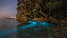 Bioluminescent plankton brings blue glow to Auckland
