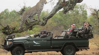 Mike Yardley: Ngala Safari Lodge, South Africa