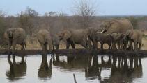 Mike Yardley: Sabi Sabi Game Reserve, South Africa