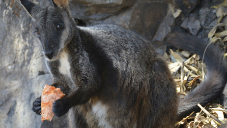 Endangered species become focus in Australia bush fire recovery