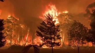 Mike Hosking: What people are ignoring when it comes to Australia's bush fires