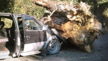 WorkSafe refuses to investigate after woman crushed by tree stump