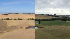 In pictures: Kiwi farmers show devastating magnitude of North Island drought