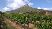 Mike Yardley: Wine time in Cape Town