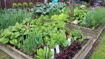 Malcolm Rands: Preparing your organic garden