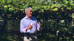 Food safety Minister Damien O'Connor on an organic Kiwi orchard in Opotiki announcing that the Organic Products Bill has been introduced into Parlianent. (Photo / Supplied)