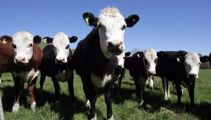 Agriculture seen as vital for NZ's economy to recover