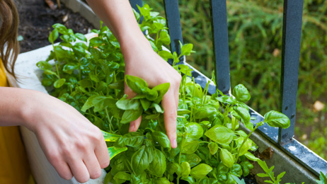 Jo McCarroll: How to start a garden without going to the shops