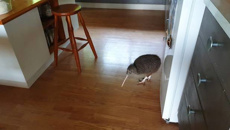 Young kiwi busted flouting lockdown rules on Little Barrier Island