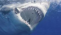 'Terrifying' great white shark encounter off Stanmore Bay in Auckland