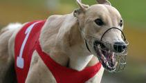 Greyhound racing back up and running