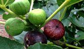 Ruud Kleinpaste: Late fruit trees
