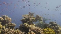 Andrew Dickens: Marine life is dying, time to stop fishing