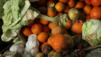 Nikki Hart: Stop wasting so much food!