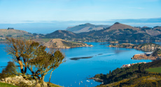 Mike Yardley: Wild about Dunedin