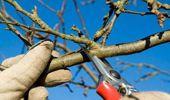 Ruud Kleinpaste: Time to start pruning