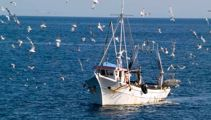 NZ First blamed for delay in fishing boat cameras by Stuart Nash in leaked recording
