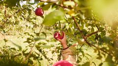 Fruit pickers and au pairs are amongst the jobs people aren't filling. (Photo / Supplied)