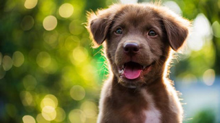 Malcolm Rands: Are pets an eco-issue?