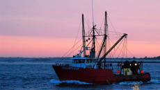 Volker Kuntzsch: Three seafood companies support putting cameras on fishing boats