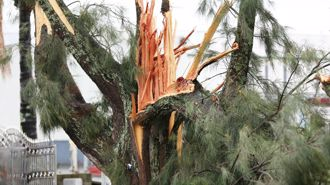 Wild weather: Auckland warned to prepare for tornadoes, power cuts