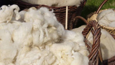 Amy Blakie: Petition launched to insulate KiwiBuild homes with New Zealand wool