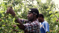 The government has introduced $50 million reforms to stop the exploitation of migrant workers. Photo File