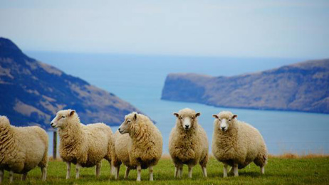 Nick Davenport: Face mask industry providing opportunities for NZ wool exports