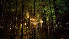 Mike Yardley: Forest frolics in Rotorua's Redwoods