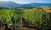 The Central Otago wine region.