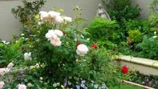 Ruud Kleinpaste: Spring Planting