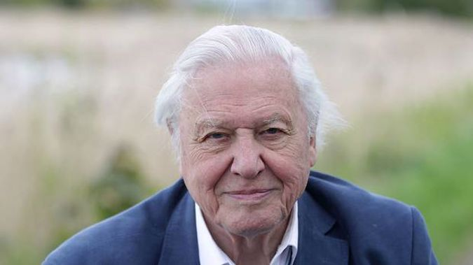 The BBC has announced Sir David Attenborough will help teach school children about the natural world. (Photo / Getty)
