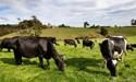 Mycoplasma bovis found on Mid Canterbury farm