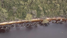 Karen Stockin: Nearly 500 pilot whales stranded in Australia; 380 dead
