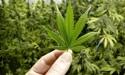 Cannabis firm Rua Bioscience to list on NZX