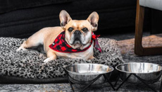 Ian Charlton: Luxury hotel brand launches dog-friendly suites with canine rates
