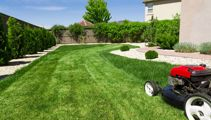 Ruud Kleinpaste: Dog ruining your lawn?